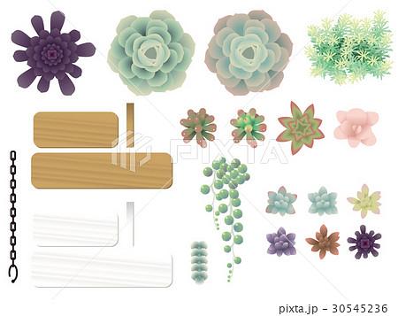 多肉植物のイラスト素材 30545236 Pixta