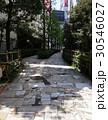 新宿遊歩道公園 30546027
