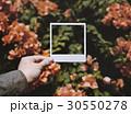 きれい 綺麗 美しいの写真 30550278