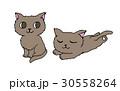 おすわりする猫と眠る猫 30558264