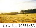 北海道 夕暮れ 牧草ロールの写真 30558433