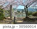 大沢池 池 桜の写真 30560014