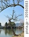 大沢池 池 桜の写真 30560883
