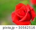 植物 花 薔薇  30562516