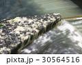 桜 ソメイヨシノ 二ヶ領用水の写真 30564516