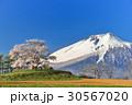 為内 一本桜 桜の写真 30567020