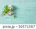 Apple tree blossom spring flowers turquoise backgr 30571567