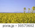 菜の花 花 植物の写真 30573602