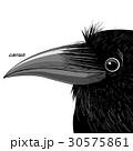 黒色 黒 ブラックのイラスト 30575861