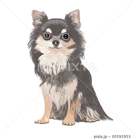 犬 チワワ おすわり 笑顔のイラスト素材 30592953 Pixta