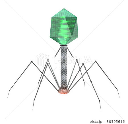 ファージ バクテリオ ファージベクターとその利用法