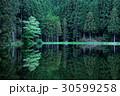 神秘な森 30599258
