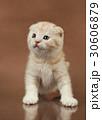 ねこ ネコ 猫の写真 30606879