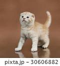 ねこ ネコ 猫の写真 30606882