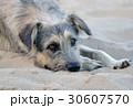 Stray dog lies on the beach 30607570