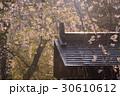 武家屋敷とシダレザクラ 30610612