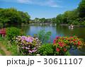 池 善福寺公園 善福寺池の写真 30611107