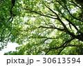 新緑 30613594
