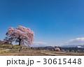 山梨 わに塚の満開の桜 30615448
