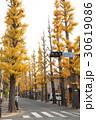 成城学園前のいちょう並木 30619086