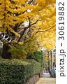 秋の成城の町並み 30619882