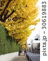 秋の成城の町並み 30619883