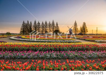 あけぼの山農業公園 チューリップ 30622075
