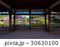 京都 平安神宮 神苑 枝垂れ桜  30630100