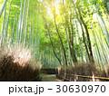 バンブー 竹 青竹の写真 30630970