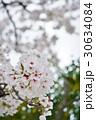 日本の桜(サクラ、さくら) 30634084