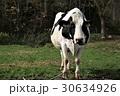 牛・ホルスタイン 30634926