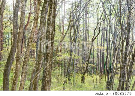 新緑の樹木 30635579