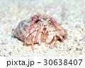 ヤドカリ 水中 海中の写真 30638407