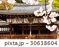 熊野若王子神社と桜(京都) 30638604