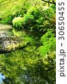 日本庭園 30650455