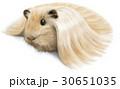 白背景 白バック 動物のイラスト 30651035