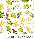 穀物 穀類 一粒のイラスト 30661281