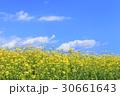 ナノハナ畑と青空に雲 30661643