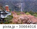 那智の滝と桜02 30664016