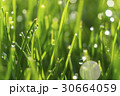 Dew drops on bright green grass with sun flare 30664059