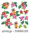 花 花柄 ハイビスカスのイラスト 30666195