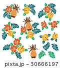 花 花柄 ハイビスカスのイラスト 30666197