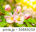花 芽 蕾の写真 30669250
