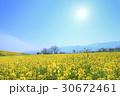 飯山市 春 菜の花の写真 30672461