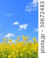 春 青空 菜の花の写真 30672483