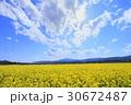 飯山市 春 菜の花の写真 30672487