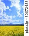 飯山市 春 菜の花の写真 30672488