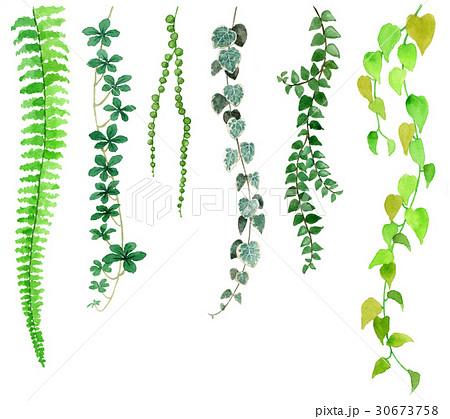 観葉植物下垂もの6種類のイラスト素材 30673758 Pixta