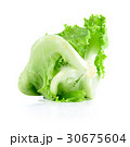 fresh  lettuce leaves isolated on white 30675604