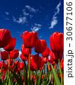 空 春 泉の写真 30677106